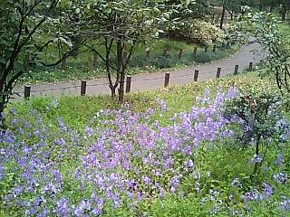 春の週末の東京_e0027033_23341476.jpg
