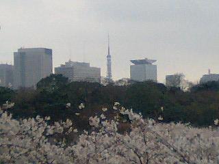春の週末の東京_e0027033_23401467.jpg