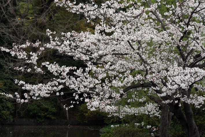 桜前線〈番外編〉〜鎌倉・段葛_c0035838_2335541.jpg