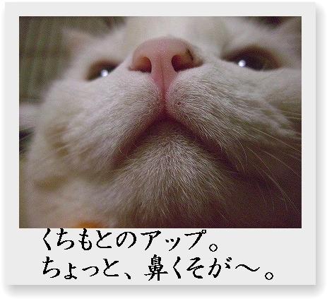 b0097145_0262128.jpg