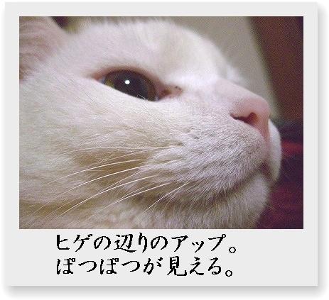 b0097145_026458.jpg