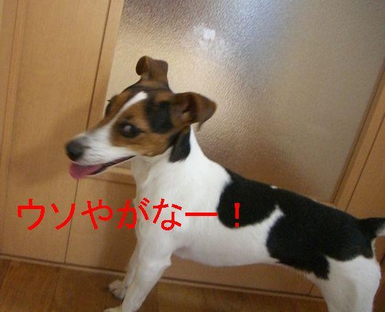 f0053952_94307.jpg