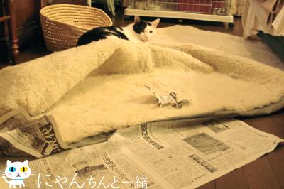 新聞紙で大興奮_e0031853_1605029.jpg