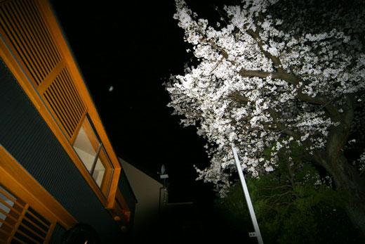 桜見の家 桜見会_b0015157_12101591.jpg