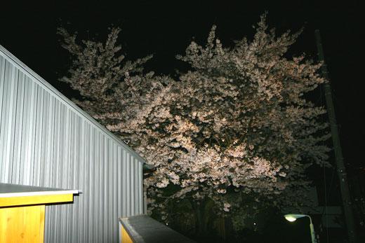 桜見の家 桜見会_b0015157_12264691.jpg