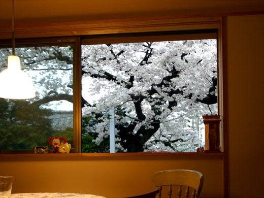 桜見の家 桜見会_b0015157_12301522.jpg