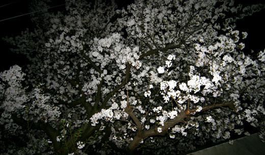 桜見の家 桜見会_b0015157_12481037.jpg