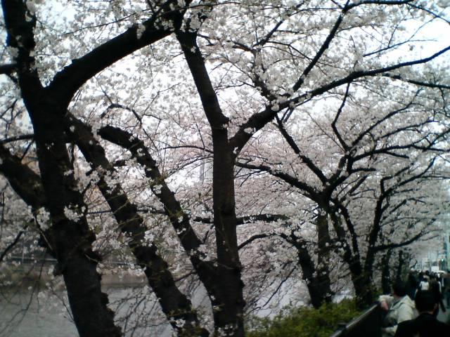 桜散歩_f0053060_13215239.jpg