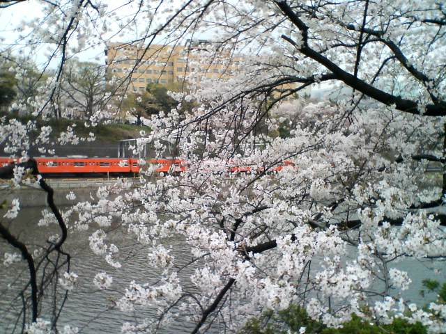 桜散歩_f0053060_13215258.jpg