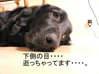 f0065568_20115046.jpg