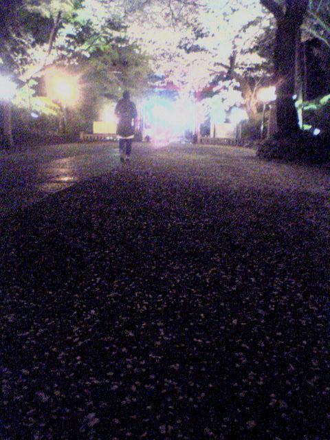 桜...にゃ_b0060102_23393770.jpg
