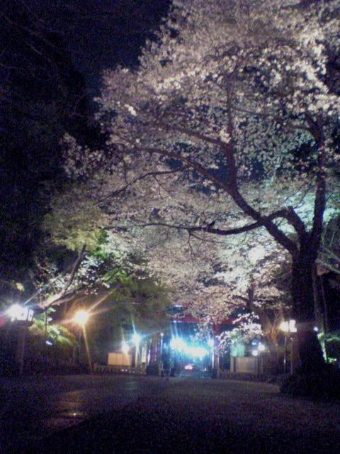 桜...にゃ_b0060102_23395411.jpg