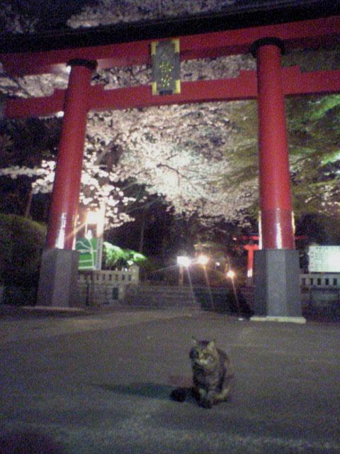 桜...にゃ_b0060102_23401442.jpg