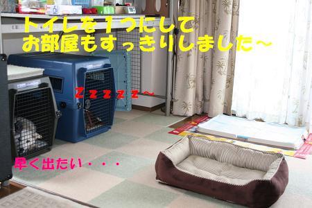 f0121712_16102783.jpg