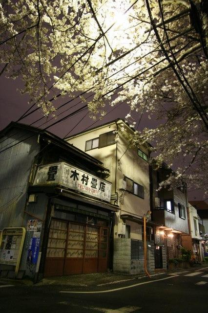 池ノ上  夜風に吹かれて桜を愛でる_b0061717_03637.jpg