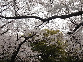 代々木公園_c0025217_23262122.jpg