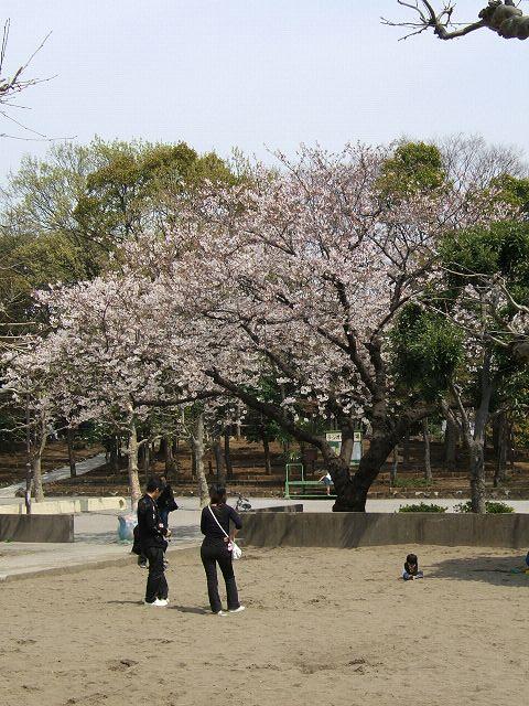 満開の桜_e0089232_2126108.jpg