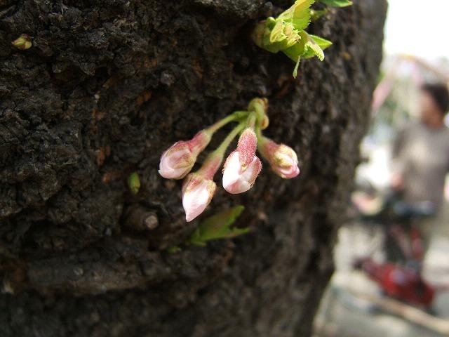 満開の桜_e0089232_2127958.jpg