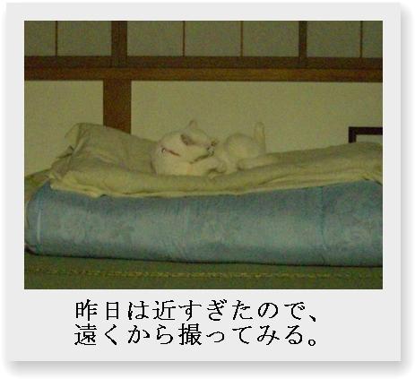 b0097145_011674.jpg