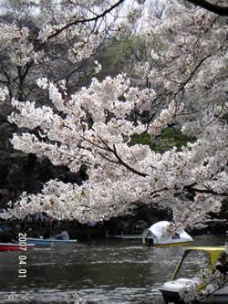 4月なので、春らしく…。_d0035245_1211496.jpg