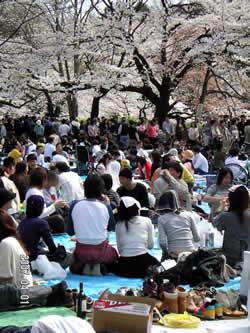 4月なので、春らしく…。_d0035245_1212726.jpg