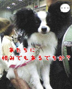 d0013149_0413162.jpg
