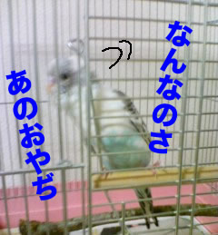 b0053867_2324216.jpg
