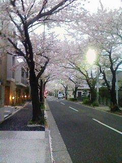 ■ 桜並木_c0100388_14451823.jpg