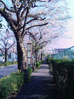 ■ 桜並木_c0100388_14451852.jpg