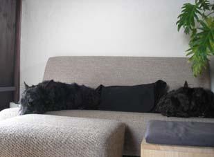犬の存在_e0055098_0281293.jpg