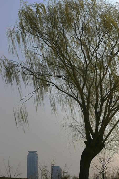 雨の休日_c0031105_88496.jpg