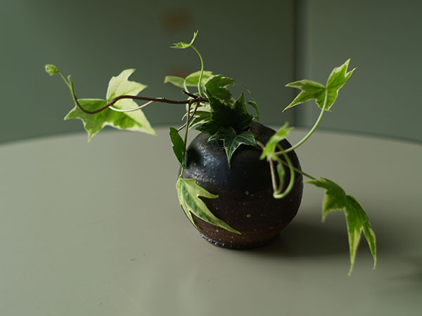 テーブルに飾られた植物_a0037907_21105352.jpg