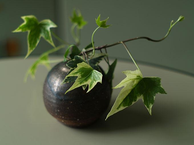 テーブルに飾られた植物_a0037907_2173215.jpg