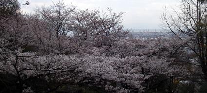 4/3(火) 久しぶりの六甲山を_a0062810_1872078.jpg