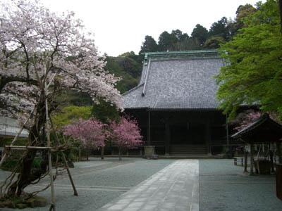 花のころの鎌倉ショップ。_a0026127_7194183.jpg
