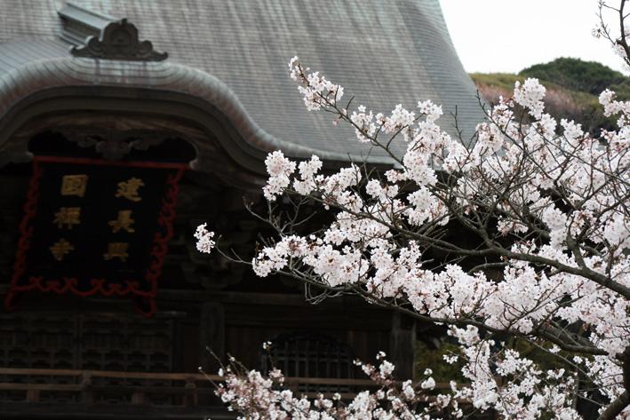 桜前線〈番外編〉〜鎌倉・建長寺_c0035838_10405329.jpg