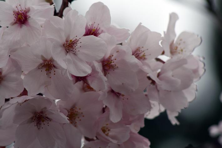 桜前線〈番外編〉〜鎌倉・建長寺_c0035838_10411365.jpg