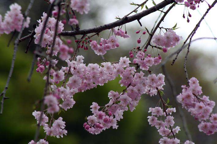 桜前線〈番外編〉〜鎌倉・建長寺_c0035838_10442498.jpg