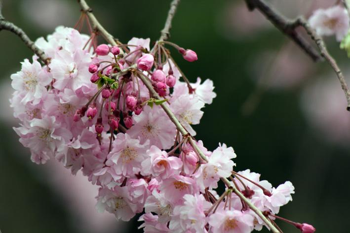 桜前線〈番外編〉〜鎌倉・建長寺_c0035838_10444745.jpg