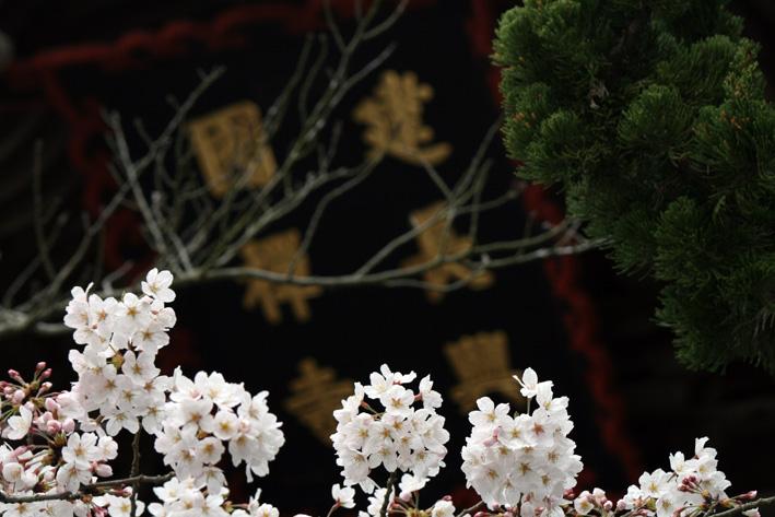 桜前線〈番外編〉〜鎌倉・建長寺_c0035838_10452140.jpg