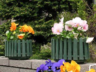 庭に咲いてる花!_e0098241_9591113.jpg