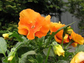 庭に咲いてる花!_e0098241_959387.jpg