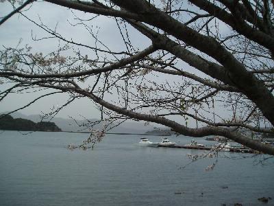 桜とマリーナ_a0077071_18302819.jpg