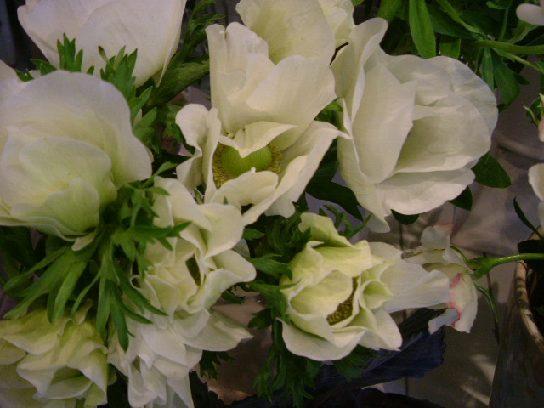 オークリーフ(白い花)_f0049672_12312015.jpg