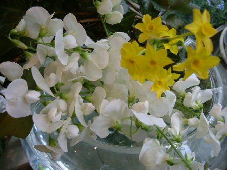 オークリーフ(白い花)_f0049672_12312886.jpg
