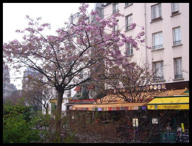 ■街角の花(PARIS)_a0008105_18333660.jpg