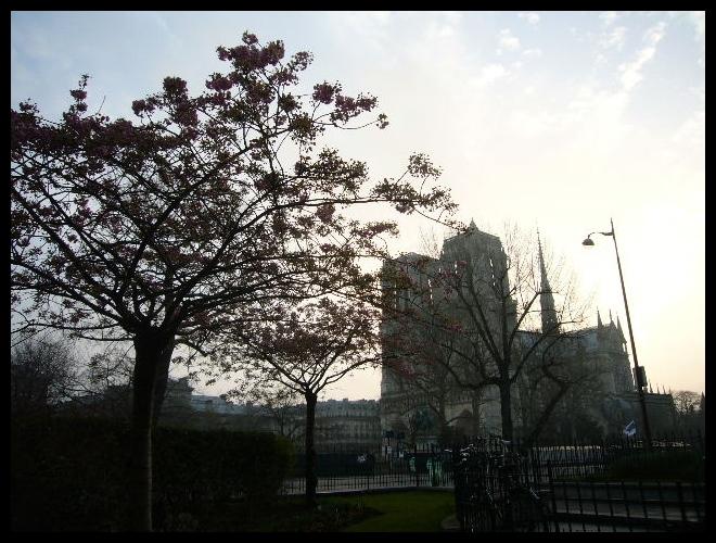 ■街角の花(PARIS)_a0008105_18335122.jpg
