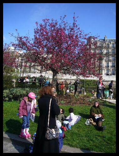 ■街角の花(PARIS)_a0008105_18341985.jpg