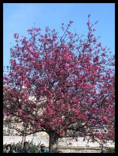 ■街角の花(PARIS)_a0008105_18343992.jpg