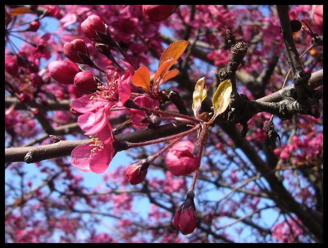 ■街角の花(PARIS)_a0008105_18352434.jpg